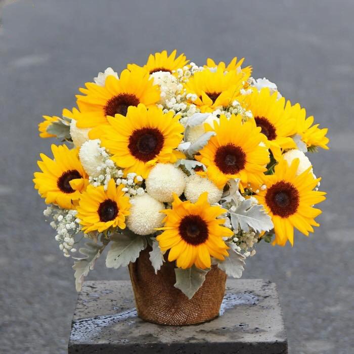 Hoa hướng dương và sự yêu thương