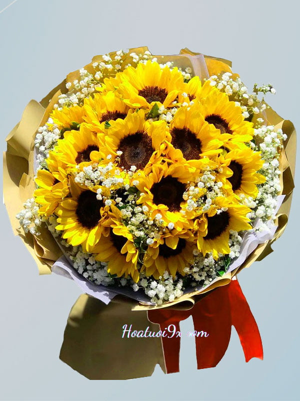 Hoa mặt Trời HD07