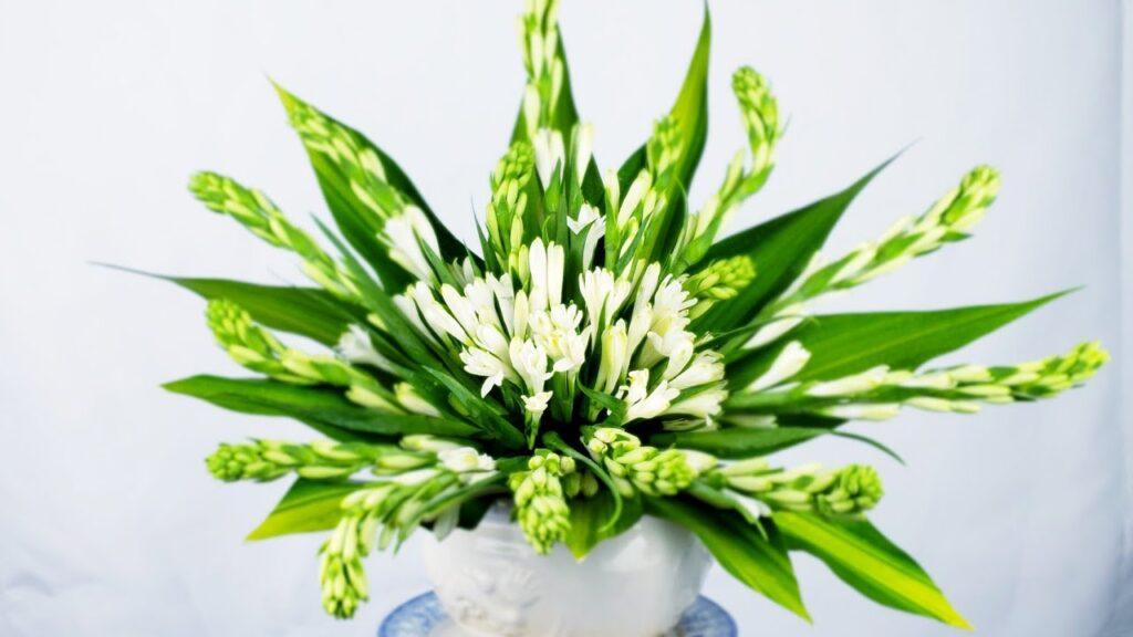 Một số đặc điểm nổi bật của hoa huệ