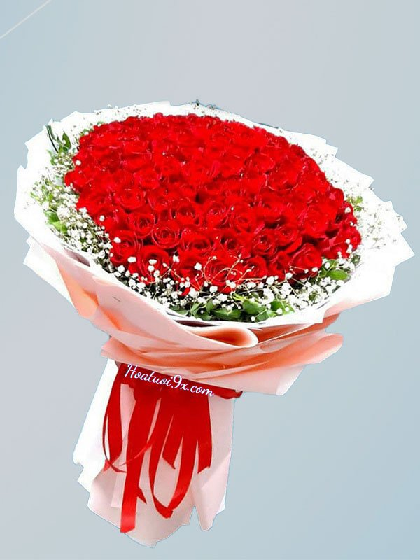 99 Bông Hồng Đỏ P2
