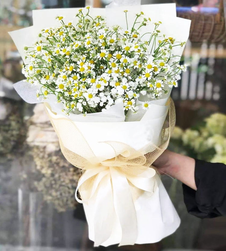 Thông điệp ý nghĩa hoa cúc tana