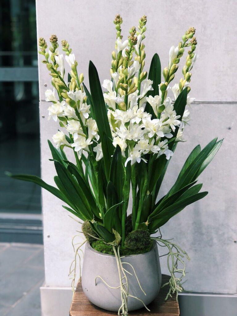 Ý nghĩa hoa huệ trắng tùy thuộc vào màu sắc