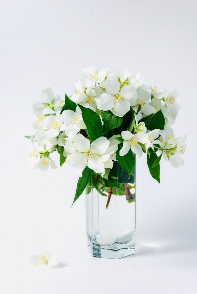 Ý nghĩa của hoa nhài màu trắng với nét đáng yêu và ngây thơ