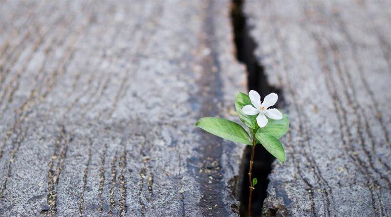 Hoa hy vọng