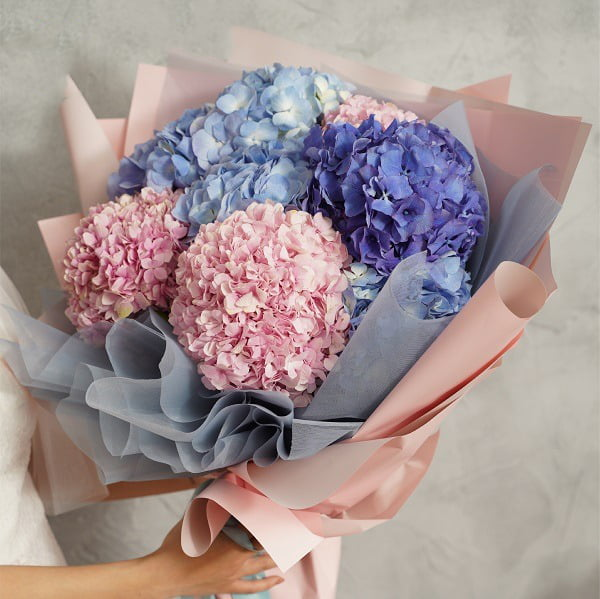 Ý nghĩa hoa cẩm tú cầu dựa vào màu sắc
