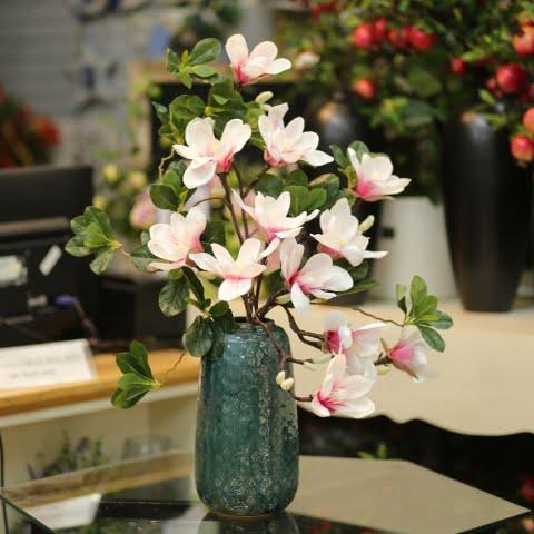 Nguồn gốc hoa mộc lan
