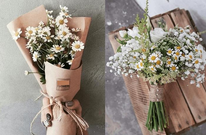 Thông tin về hoa cúc