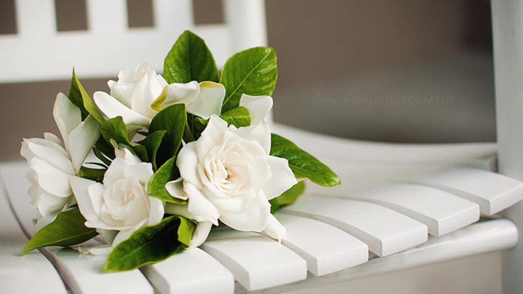 Ứng dụng của hoa dành dành