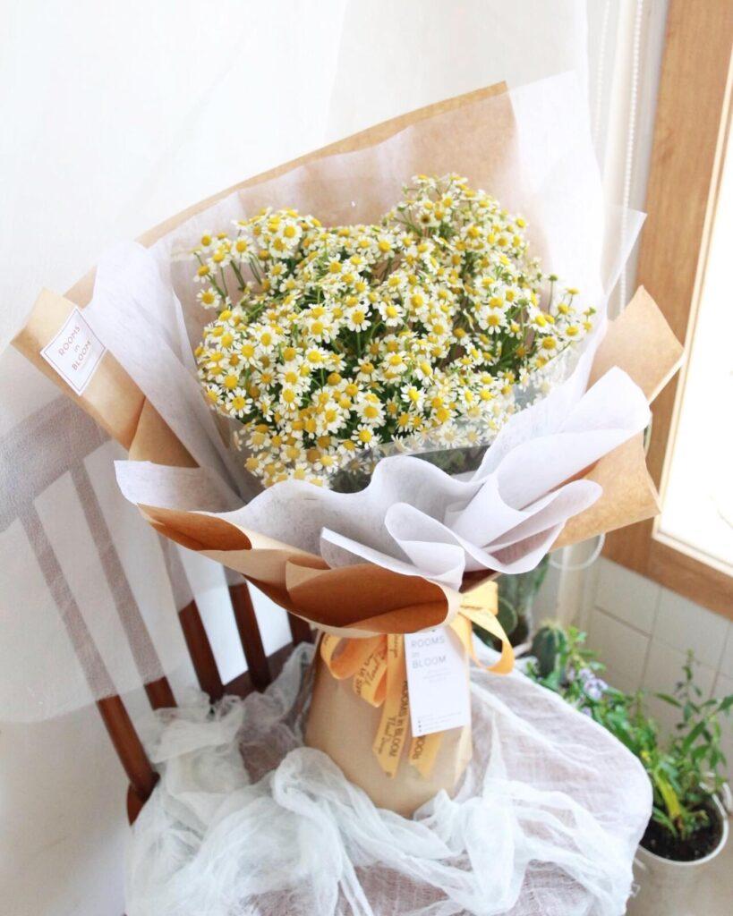 Hoa cúc - Loài hoa hy vọng