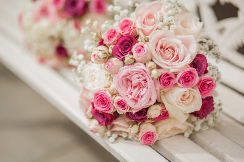 Đặc điểm của loài hồng phấn
