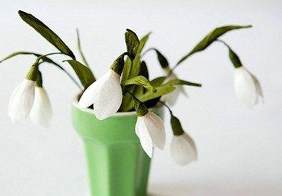 Hoa giọt tuyết - Loài hoa hy vọng
