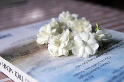 Một số thông tin về hoa nhài