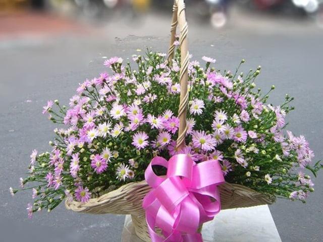 Ý nghĩa hoa thạch thảo theo màu sắc