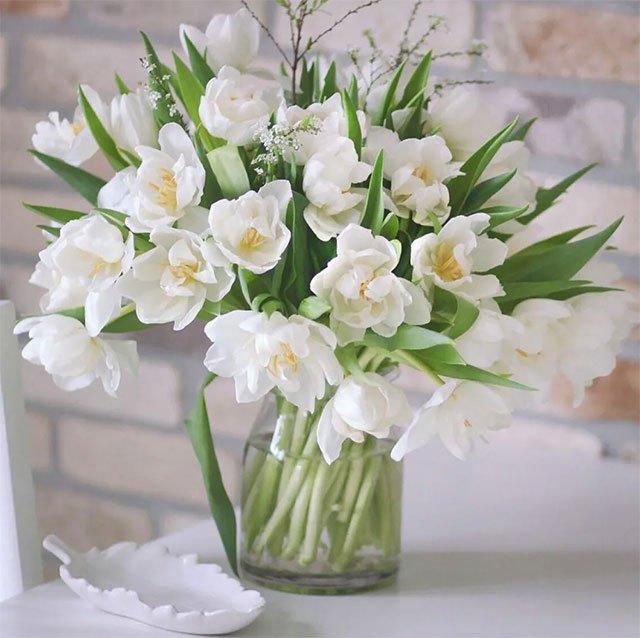 Ý nghĩa của màu sắc của hoa tulip