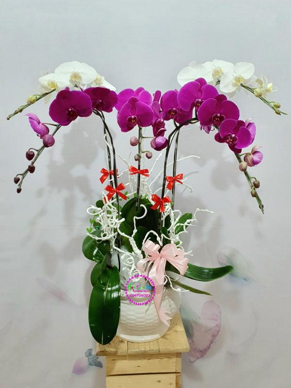 hoatuoi9x-chat-luong-san-pham-chat-luong-dich-vu-tot