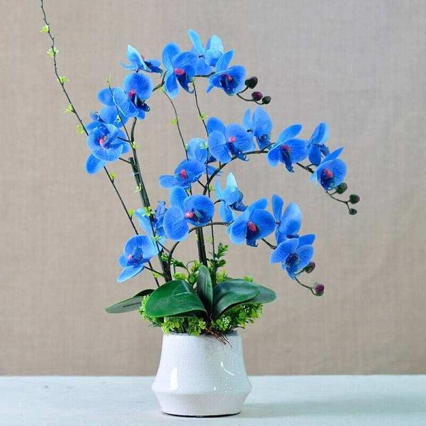 9 loại hoa may mắn