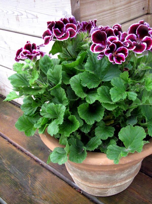hoa sẫm màu: tượng trưng cho nỗi u sầu