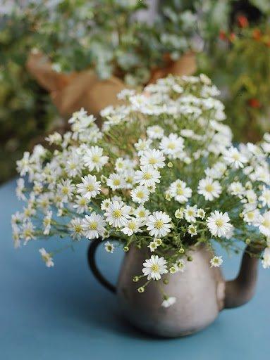 Ý nghĩa hoa thạch thảo trong văn hóa phương Tây