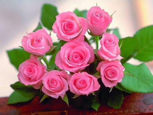 Ý nghĩa của bông hồng thông qua số lượng và màu sắc