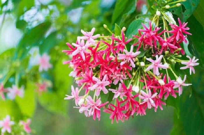 Kỹ thuật trồng cây hoa giun