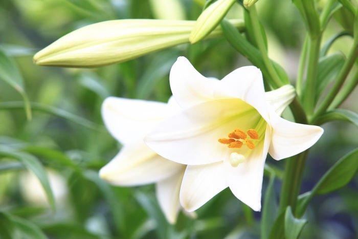 Một số điều cần lưu ý khi thực hiện cắm hoa huệ