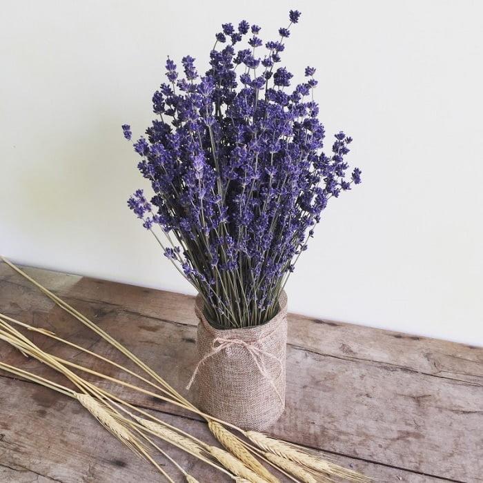 Biểu tượng ý nghĩa hoa lavender