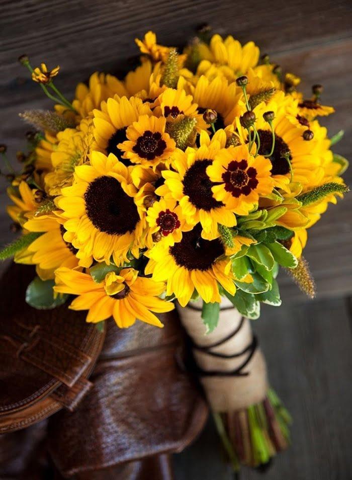 hoa hướng dương và sự ngưỡng mộ