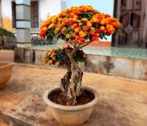 Ý nghĩa hoa ngũ sắc trong phong thủy