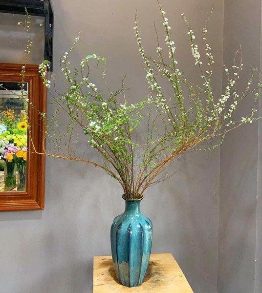 Cách chăm sóc cây hoa Tuyết Mai