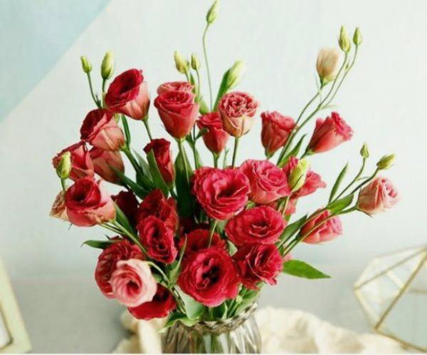 Hoa cát tường màu đỏ