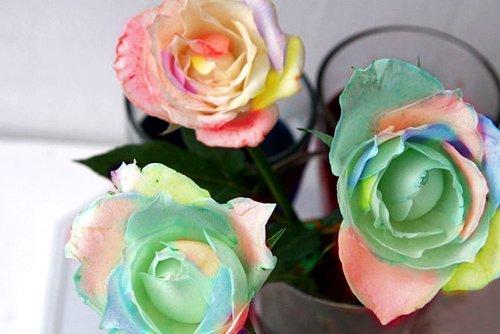 Đổi màu hoa hồng 7 sắc cầu vồng