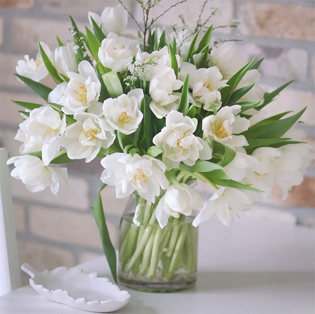 Hoa tulip.