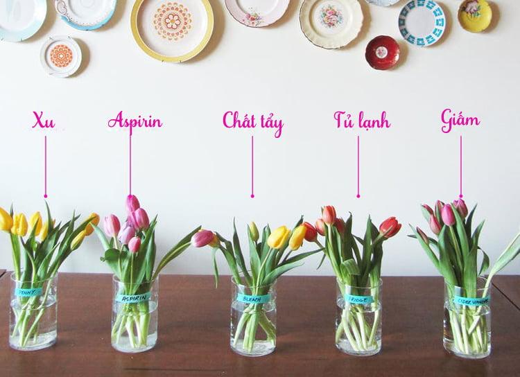 Cách bảo quản hoa khai trương luôn tươi mới