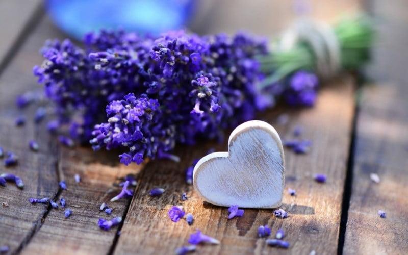 hoa oải hương cò thể hiện sự chờ đợi khắc khỏi và tình cảm được đồng điệu với nhau