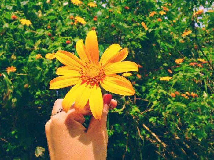 hoa có đường kính khoảng 10 cm