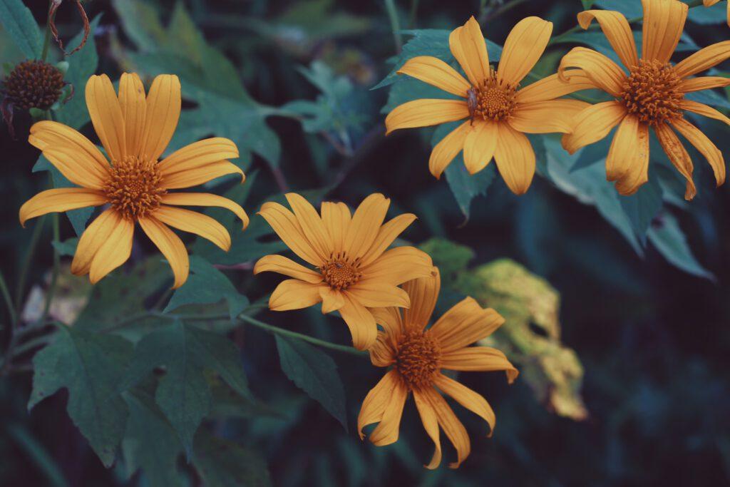 được trồng ở những khu vực có khí hậu nhiệt đới và cận nhiệt đới