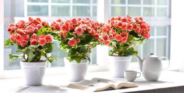 Tỉa cây hoa