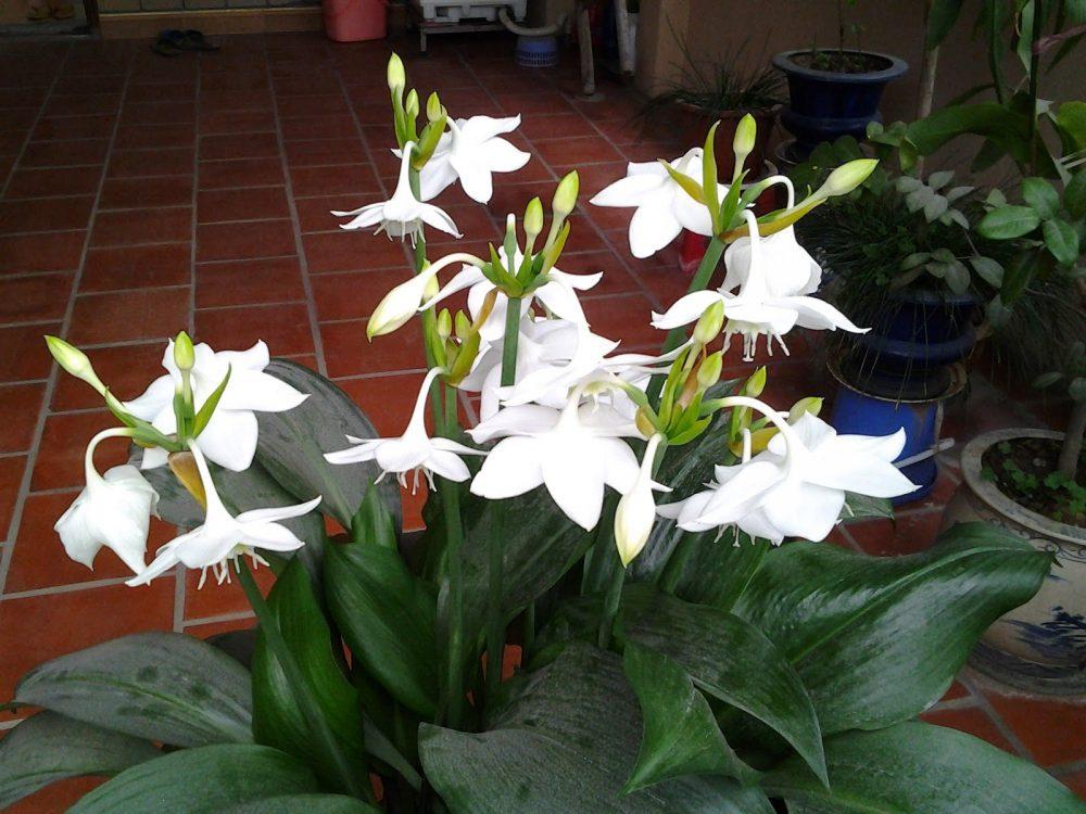 Ý nghĩa của hoa ngọc trâm