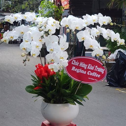 Lẵng hoa lan đẹp - Hoa tươi 9x