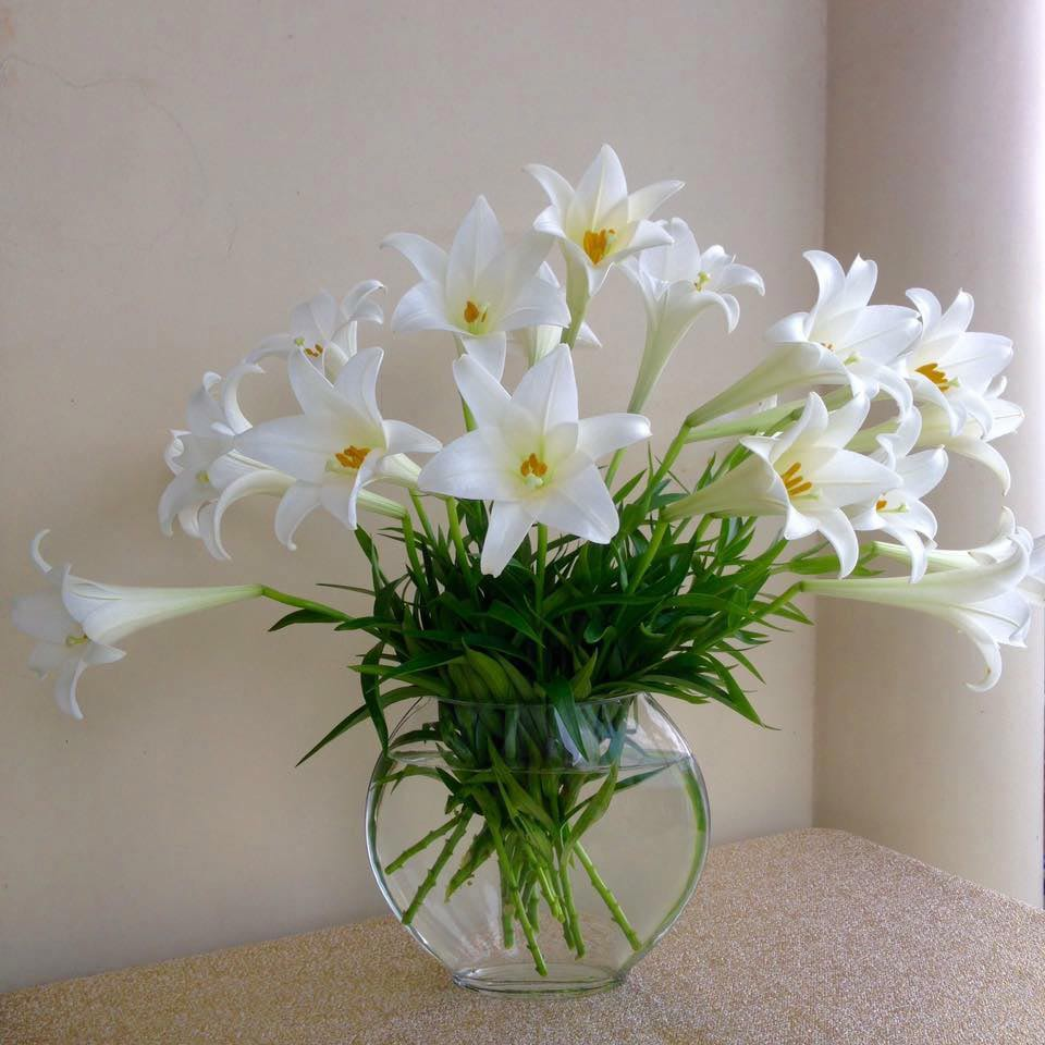 hoa loa kèn thể hiện cho tình cảm gia đình thiêng liêng