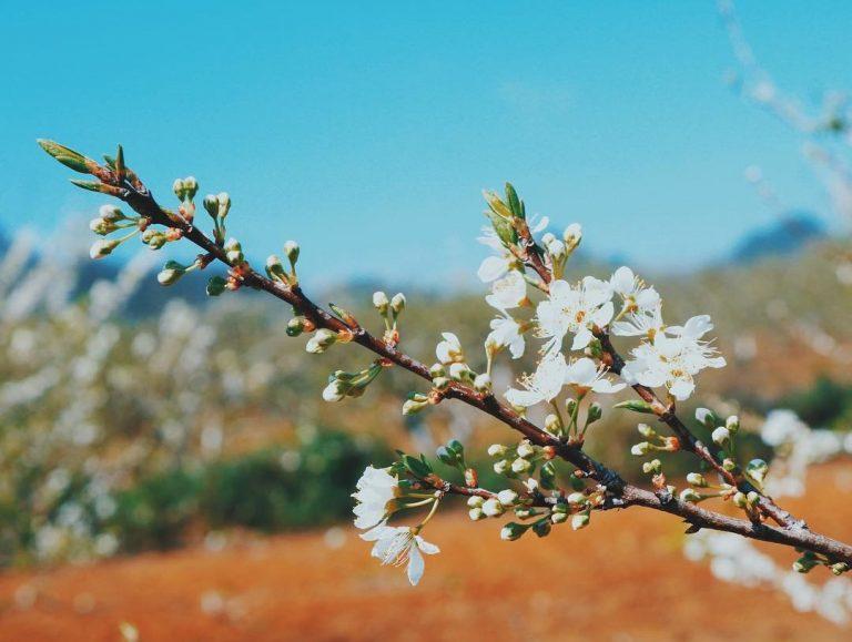 thời điểm hoa tàn cây sẽ bắt đầu chu kỳ cho quả