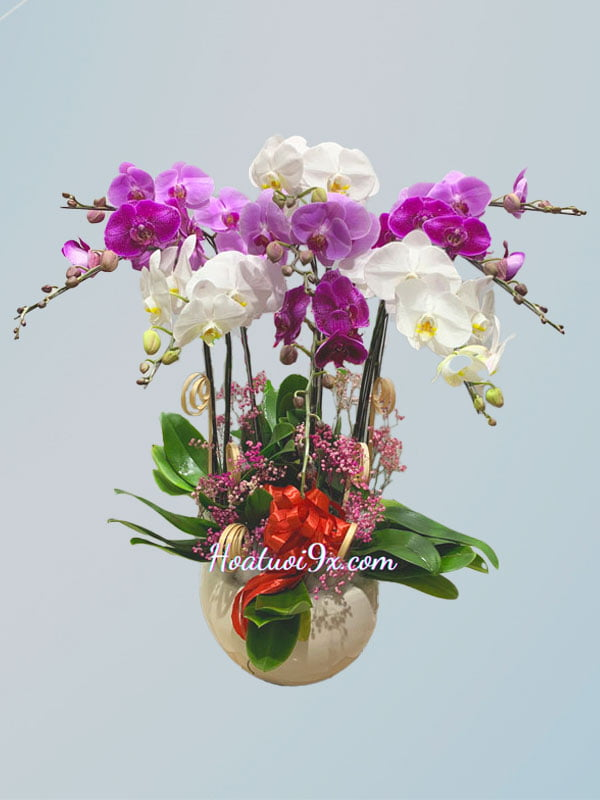 Hoa lan hồ điệp - Hoa sinh nhật cao cấp
