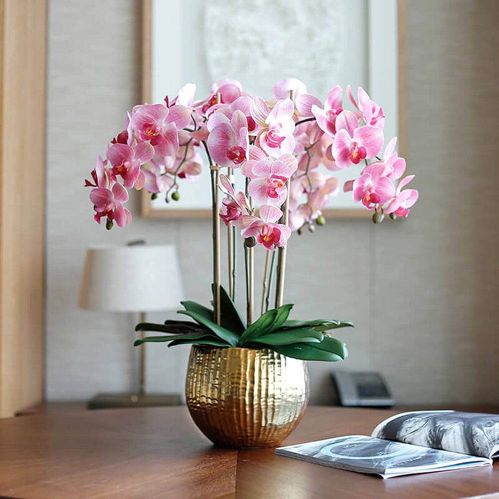 Đặc điểm cây hoa phong lan