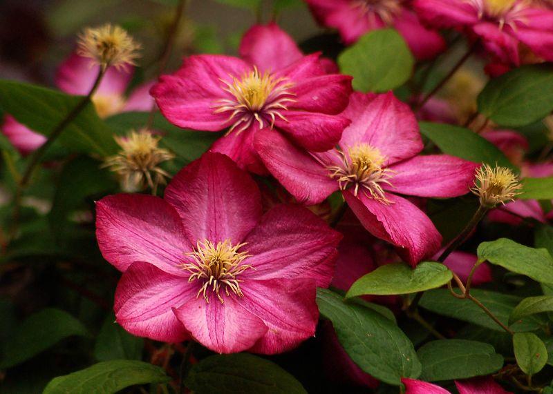 Ý nghĩa cây hoa ông tiên