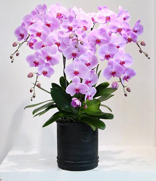 chọn lựa hoa tươi dựa trên sở thích
