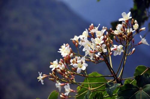 thiên niên đồng tượng trưng cho một vẻ đẹp hùng vĩ của núi trời