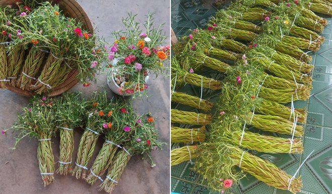 Cách làm hoa mười giờ bonsai để bàn