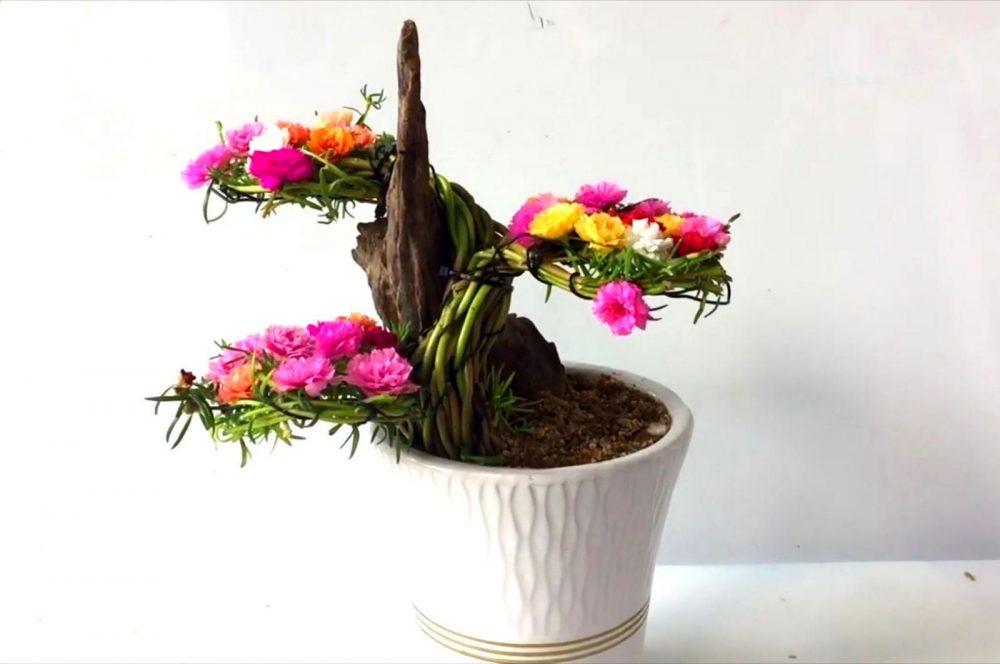 Cách chăm sóc hoa mười giờ bonsai cần biết