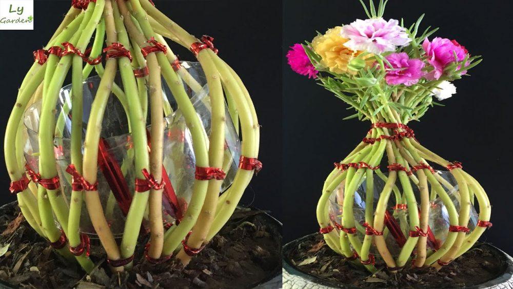Cách trồng và chăm sóc hoa mười giờ