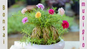 Cách trồng hoa mười giờ thành quả cầu đẹp dễ thực hiện